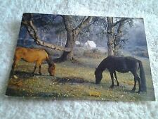 Vintage postcard PONIES IN THE NEW FOREST HAMPSHIRE