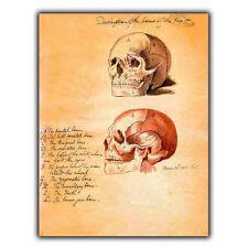 Letrero de metal placa de pared Cráneo Cabeza humana Vintage Impresión cirugía Anatomía/médico/