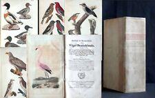 BREHM Naturgeschichte aller Vögel Deutschlands 1831 Ornithologie Zoologie