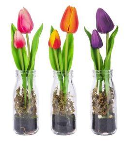 Ganz Tulip in Glass Bottle - Choose Your Color (EA17080)
