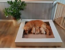 HDPE Puppy Whelping Box, Whelping Box, Puppies