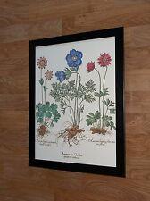 Anenome -Tulip - vintage Print by Besler - 12''x16'' - botanical framed Set
