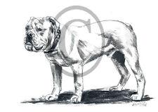 Old English Bulldog 01, Kunstdruck einer Kohlezeichnung, 30 x 21 cm, Hunde