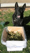 Huge Box of Fresh Cut Real Live Mistletoe 50+ sprigs