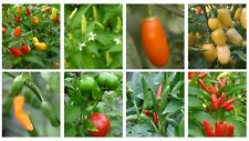 Chilli pepper seed collection. 10 seeds choose from Super hot, Hot, Mild
