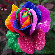 200XSTK Regenbogen Rosen Blumensamen Multi Farbe Garten Pflanzen Rose Samen