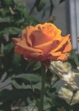 DIGITAL PICTURE/PHOTO/IMAGE/LANDSCAPE/FLOWERS/FINE ART PRINTS/HAND-SIGNED