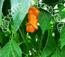 10 Semi/Seeds  DI PEPERONCINO PETER PEPPER ORANGE