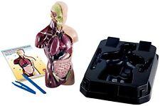 Modelo de anatomía humana eduscience con órganos Suave