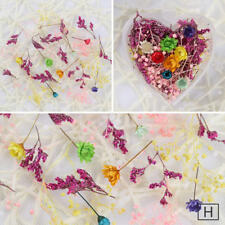 Nail Art Mixed Dried Flowers DIY Bottle Preserved Flower  Decoration #5