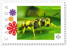 uq. WASP = Insects = bee = Picture Postage MNH-VF Canada 2019 [p19-01s17]