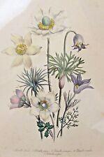 ANTIQUE 1843 LOUDON LITHO ART PRINT - THE LADIES COMPANION TO THE FLOWER GARDEN