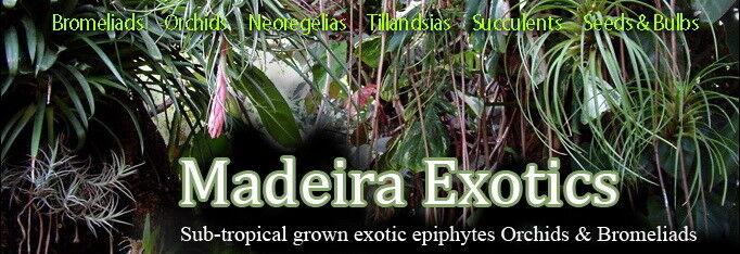 Madeira Exotics