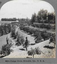 Riverside California Orange Grove 1909 Keystone Stereoview