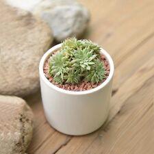 Big White ceramic planter/Succulent Plant/flower planter pot have a drainage hol