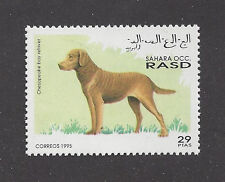 Dog Art Full Body Postage Stamp CHESAPEAKE BAY RETRIEVER Spanish Sahara 1995 MNH