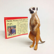 Choco Egg Miniature Figure Suricate Meerkat Furuta Japan