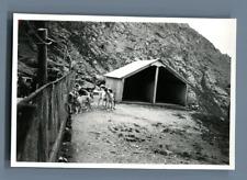 Suisse, Grand Saint Bernard, Les toutous de l'Hospice  Vintage silver print