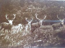 "J.B.White publishers Dundee ""Deer in Deeside""postcard"