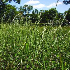 "Gulf Annual Ryegrass "" Cool Climate Lawn Grass "" - 20 Lbs. (FREE SHIP)"