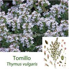 Tomillo ( Thymus vulgaris ) 0,3 gr / 1.500 semillas apróx - seeds