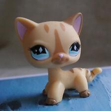 Cute Brown diamond eyes  #886 LPS Action Figure Littlest pet shop