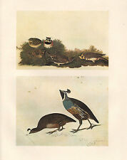 VINTAGE JOHN JAMES AUDUBON BIRD PRINT ~ HORNED LARK ~ CALIFORNIA QUAIL