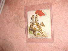 1910 ZIRA CIGARETTES SILK - SIOUX CHIEF SIGNALING - THE ENEMY IS COMING