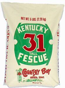Professional Grade Kentucky 31 Tall Fescue Lawn & Turf Grass Seed 5 lbs 1250sqft