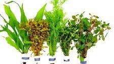 Aquariumpflanzen Set  XL Bunde, Aquarienpflanzen, Dicke Bunde, Wasserpflanzen