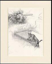 SCOTTISH TERRIER  RAT GRAVESTONE OLD 1930'S KF BARKER DOG SKETCH PRINT MOUNTED