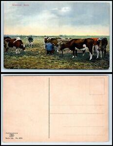 NETHERLANDS Postcard - Broek in Waterland DZ1