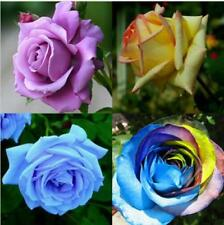 Rose Flower Seeds Plant Garden Spring Decoration Colorful Rainbow 200Pcs Mixed