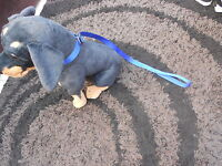 """25MM. 1"""" INCH WIDE DOG SLIP LEAD GREAT STRONG LEAD FOR SMALL OR BIG DOGS"""