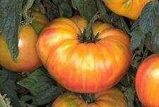 Tomato Pineapple 40 Vegetable Seeds