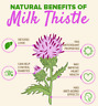 Milk Thistle Capsules 100% Organic DR SEBI All Natural NON-GMO