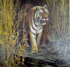 Vintage Art Robert Bateman Tiger at Dawn Reeds Big Cat Wild Tall Grasses 1984