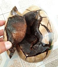 4140g   RARE Large Dragon Septarian Crystal Sphere Geode egg Healing  QD77