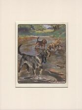 OTTERHOUND DOGS IN STREAM OLD ANTIQUE 1906 DOG PRINT by VERNON STOKES MOUNTED