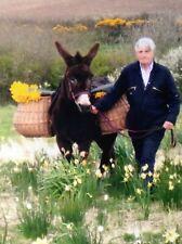More details for donkey/ pony vintage pannier baskets