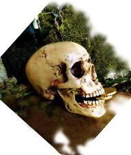 Schädel, anatomisch lebensecht, Totenkopf, Totenschädel + Unterkiefer, Gothik