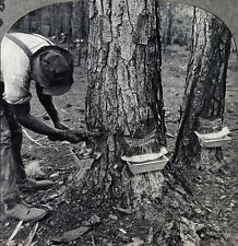 Keystone Stereoview Tapping Pine Trees for TURPENTINE in GA 600/1200 Card Set T1