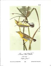 Prairie Wood-Warbler Vintage Bird Print by John James Audubon