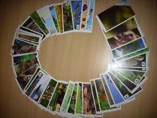 """EDEKA TOOM WWF - """"Unser Wald""""- 5 Sticker aus allen 180 aussuchen"""