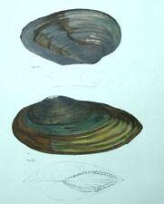 Restaurantes Decoración Fruits del mar Conchas conchas Litografía siglo XIX