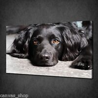 BLACK RESTING SPANIEL DOG ANIMAL WALL ART CANVAS PRINT PICTURE READY TO HANG