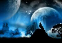 328891 Wolf Howling at the Moon PRINT POSTER DE