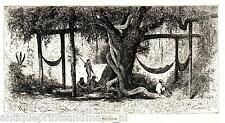 Antique print Panama Central America 1883 forest tree