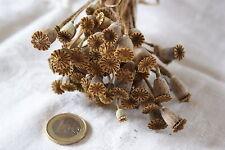 Mohnkapseln getrocknet, schön filigran - ca.50 Stck Deko Basteln Natur Floristik