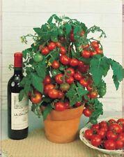 """20 Graines Tomate Cerise """"SUGAR LUMP"""" Très Sucrée!  - Frais de port Unique !!"""